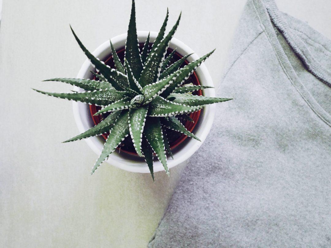 succulent_minimalism