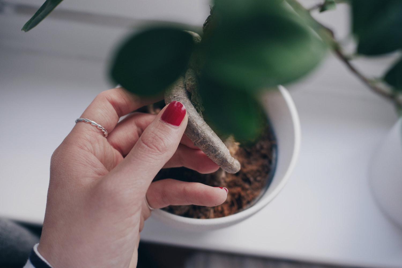 liebevolle Pflanzen Pflege