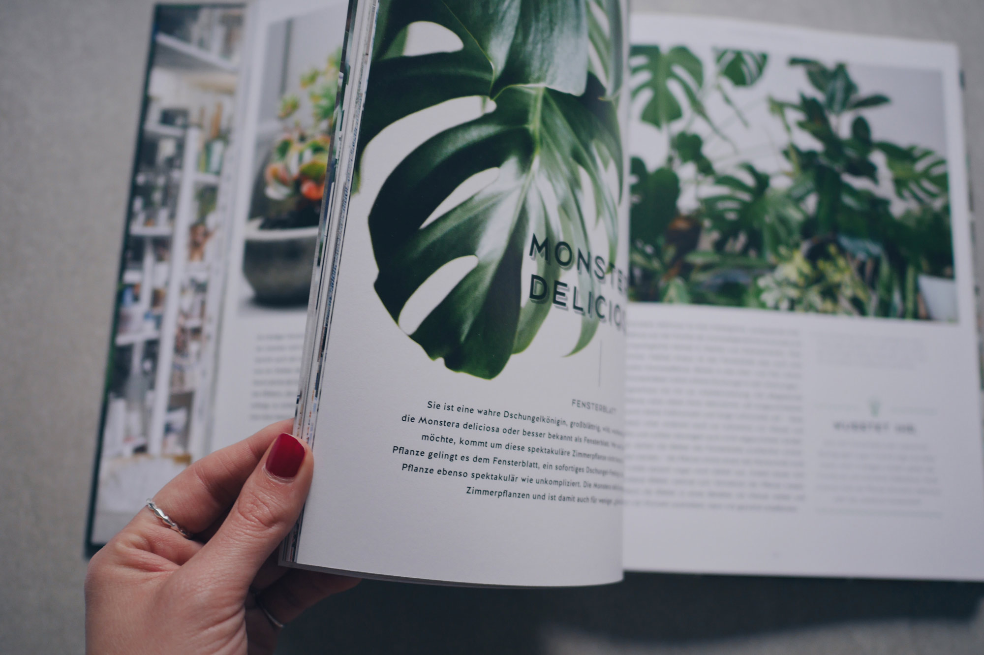 Pflanzen Pflege Guide