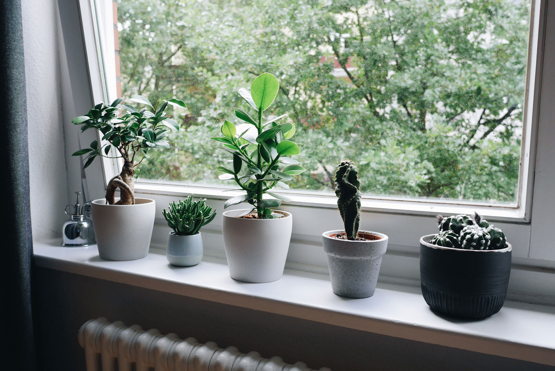 Pflanzen auf der Fensterbank